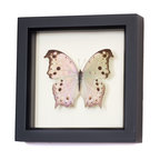 Bug Under Glass - Mother of Pearl Butterfly - A real Mother of Pearl butterfly is forever preserved in its own shadowbox, adding a delicate shimmer to your hallway, kitchen or living area. Cluster a group together to create your own walled migration, or let a single delicate butterfly bring spring inside year-round.