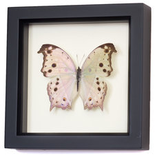 Contemporary Originals And Limited Editions by Bug Under Glass