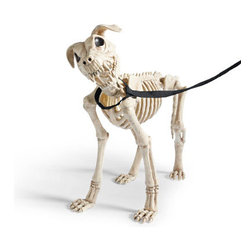 """Grandin Road - 21-1/2"""" Halloween Skeleton Dog on Leash - Lifelike skeleton dog Halloween figure with detachable fabric leash. Crafted from durable all-weather plastic to scare up compliments for Halloweens to come. A natural to become the best friend of our 5'H Skeleton or sibling to our 7-1/2"""" High Skeleton Dog on Leash. Get a whole pound full and form your own pack. Minor assembly required. Thrill them to the bone with our frightfully realistic 21-1/2"""" High Skeleton Dog on Leash Halloween figure. Allow our chilling canine to stand guard by the bowl of treats, or take him for a """"walk"""" at your neighborhood dog park, where you're sure to have it all to yourself. Very easy to care for, he never barks and doesn't eat a thing – apparently. .  . .  . . A Grandin Road exclusive."""