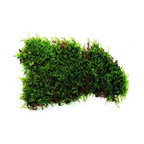H Potter - Terrarium Moss - Make your indoor space green from the ground up, starting with a lush layer of moss. This square-foot section is perfectly sized for your tabletop terrarium and perfectly poised to bring your interior decor to life.