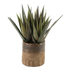 """D&W Silks - Artificial Stripped Agave in Round Planter - It's amazing how much adding a plant can change the look of a room or decor, but it can be difficult if your space is not conducive to growing plants, or if you weren't exactly born with a """"green thumb."""" Invite the beauty of nature into your home without all the upkeep with this maintenance-free, allergy-free arrangement of artificial stripped agave in a round planter. This is not a living plant."""