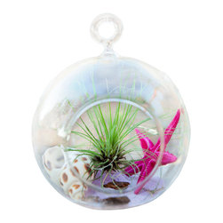Air Plant Company - Pink Star Circle Terrarium - Pink Star Circle Terrarium