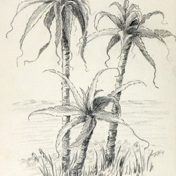 Palm Trio, C. 1980, Artwork - Original graphite drawing of a delicately rendered grove of palm trees, circa 1980.