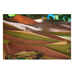 "Lost Art Salon - ""Madrone Bark Peeling in Summer"" 2011 Mendocino Original Photograph - Entitled ""Madrone Bark Peeling in Summer"", this 2011 nature abstract is by contemporary Mendocino/Bay Area artist, Gaetan Caron (b. 1964), co-founder of Lost Art Salon in San Francisco. Part of the fine art photography documentation of the artist's homestead in Mendocino, Northern California. Produced in a limited edition of seven and printed on archival Hahnemuhle Fine Art Pearl paper."