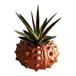 Copper Sea Urchin with Air Plant - This listing is for ONE faux copper (painted) sputnik sea urchin shell which houses a single Tillandsia veluntina. The painted sea urchin would be a cute display for any desk or table top. Easy to care for! Care sheet included.