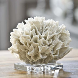 Coral on Crystal Stand - Most people think that coral is a plant. But it's not! Corals are animals that attach themselves to the ocean floor. And this one is a life-like beauty!