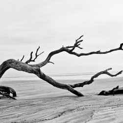 Bent Tree on Driftwood Beach, Jekyll Island GA Artwork - Driftwood Beach, on Jekyll Island in the US state of Georgia, is a beach that seems haunted by the tortured skeletons of old, dead trees. In spite of the name, these hundreds of trees littering the beach are not actually driftwood, but trees that are slowly being claimed by the ocean due to beach erosion. The overall effect is spooky, beautiful, and surreal.  16in. x 24in. resin coated (RC) silver-based photograph on luster surface paper. Borderless, mounted on rigid board, and signed au verso.
