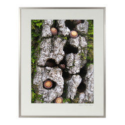 Lost Art Salon - Blue Oak Bark, Moss & Acorns Mendocino, CA Original Photograph - This 2010 nature abstract with Blue Oak bark, moss and acorns is by contemporary Mendocino/Bay Area artist, Gaetan Caron (b. 1964), co-founder of Lost Art Salon in San Francisco. Part of the fine art photography documentation of the artist's homestead in Mendocino, Northern California. Produced in a limited edition of seven and printed on archival Hahnemuhle Fine Art Pearl paper.  Framed in a contemporary German silver metal frame using 8-ply archival matting behind conservation clear glass.