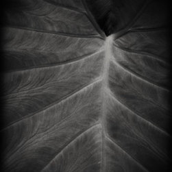 """The Leaf On Wood"" Artwork - The leaf is a mystical image of a large tropical plant in black and white printed on wood. this is a small limited edition of this image printed on wood. the wood print can be displayed using a stand, by attaching hangers on the back and hung as is or fit into a frame. the wood is a slim 1/8 inch so it will fit anywhere a regular mat would fit. printing on wood allows the natural wood grain to show through the print giving it a unique texture. no two prints in this series will be exactly alike due to the natural quality of wood."