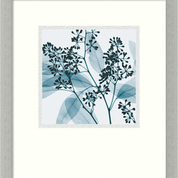 "Amanti Art - ""Eucalyptus II"" Framed Print by Steven N. Meyers - If you've ever wondered about the inner workings of plant life, then this stunning botanical x-ray print is for you. This revelatory eucalyptus piece, by artist Steven Meyers, comes framed in an ultramodern, silver leaf frame."