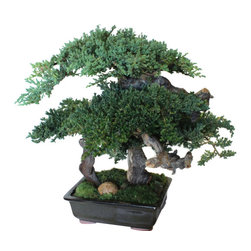 "20"" Monterey Bonsai - The Large Monterey Bonsai is one of our favorite bonsai tree designs. This is a handsome bonsai tree with dense canopies of preserved juniper and trunks of grape wood."