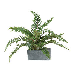 "D&W Silks - Artificial River Fern in Rectangle Planter - It's amazing how much adding a plant can change the look of a room or decor, but it can be difficult if your space is not conducive to growing plants, or if you weren't exactly born with a ""green thumb."" Invite the beauty of nature into your home without all the upkeep with this maintenance-free, allergy-free arrangement of artificial river fern in a rectangle planter. This is not a living plant."