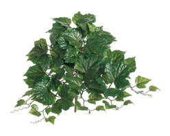 Silk Plants Direct - Silk Plants Direct Algerian Ivy Hanging Plant (Pack of 12) - Pack of 12. Silk Plants Direct specializes in manufacturing, design and supply of the most life-like, premium quality artificial plants, trees, flowers, arrangements, topiaries and containers for home, office and commercial use. Our Algerian Ivy Hanging Plant includes the following: