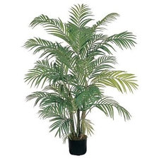 Traditional Plants by Kohl's