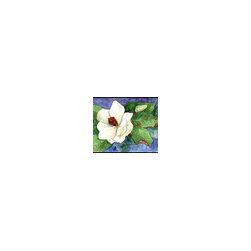 Caroline's Treasures - Flower - Magnolia Indoor or Outdoor Mat 24 x 36 Doormat - Indoor / Outdoor Mat 24 x 36 - 24 inches by 36 inches. Permanently dyed and fade resistant. Great for the front door or the back door. Use this mat inside or outside. Use a garden hose or power washer to chase the dirt off of the mat. Do not scrub with a brush. Use the Vacuum on floor setting. Made in the USA. Clean stain with a cleaner that does not produce suds.