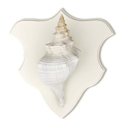 "Karen Robertson - Florida Conch Trophy Mount by Karen Robertson - One of the most beautiful and recognizable of shells is the Florida Conch. Bring a striking and inspiring look to your walls with a shell trophy mount. Each mount is custom made by hand then artistically matched with corals or shells. Decorate a coastal space with this monochromatic display from the ocean. (KR) 14"" wide x 15"" high"