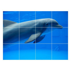 Picture-Tiles, LLC - Dolphin Picture Kitchen Bathroom Ceramic Tile Mural  12.75 x 17 - * Dolphin Picture Kitchen Bathroom Ceramic Tile Mural 1466