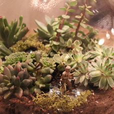 Eclectic Plants by Sara Bates