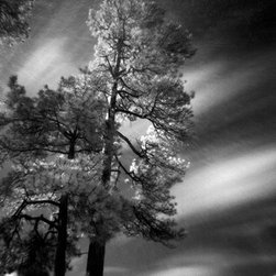 """Trees, Vallecito Lake - Large-Scale, Limited Edition Photography - A magical, early morning shot as the sun was cresting over the mountains in Colorado. Photographer Cody Brothers captured the first light in the sky on the mountains, lake and trees by using a pinhole camera and extending his exposure to 30 minutes. You can actually see the rays of sunlight in the sky in this large 18"""" x 28"""" fine art photograph."""
