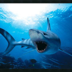 "Amanti Art - ""Shark"" Framed with Gel Coated Finish - Put a powerful print on your wall with this oceanic scene of a shark on the prowl. This underwater shot comes in a satin black laminate ecofriendly frame, for an ultramodern look."