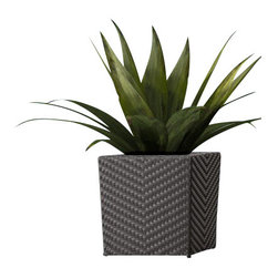 ZUO - Zuo Cancun Short Planter - Present your plants in a tidy, stylish planter, perfect for cacti, succulents and large blooming bushes. The planter comes in tall or short sizes and is equally effective inside and out.