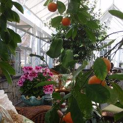 English / Victorian Greenhouses - Glasshouses -