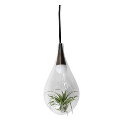 Small Signature Hanging Terrarium Pendent Lamp - Bringing the outdoors in is something we all strive to do but it can be difficult to accomplish. This one of a kind water-drop blown-glass and brass pendent lamp stylishly delivers while maintaining a clean polished look. Each lamp displays a live, growing air-plant bringing both light and life to your living space. One is enough to set-off any area of your home while a grouping can create dramatic results. If you're concerned you don't have a green thumb, these exotic plants require very little maintenance and we'll send along a few pointers with your purchase.