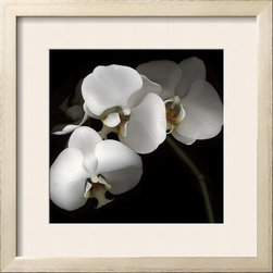 Artcom - White Phalaenopsis Orchids by Michael Freeman Artwork - White Phalaenopsis Orchids by Michael Freeman is a Framed Photographic Print set with a SHABBY CHIC Cream wood frame and a Soft White mat.
