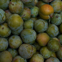 Magic Murals - Green Plums in Tuscany Wallpaper Wall Mural - Self-Adhesive - Multiple Sizes - M - Green Plums in Tuscany Wall Mural