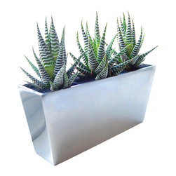LushModern - Zebra Cactus // Mirror Vase - For a fun, graphic botanical activity with lasting results, grab this cacti kit — one polished aluminum vase, three zebra cacti, a small bag of gravel, potting soil, black sand, a finishing brush and a water bottle — everything you need to give these striped succulents a permanent home on your windowsill!