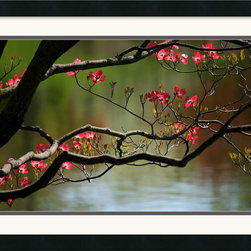 Amanti Art - Dogwood in Bloom Framed Print by Andy Magee - With reflective water in background this beautiful pink dogwood branch is surely a sight to behold.
