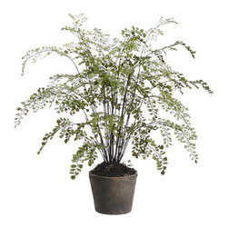 Silk Plants Direct - Silk Plants Direct Maidenhair Fern (Pack of 2) - Silk Plants Direct specializes in manufacturing, design and supply of the most life-like, premium quality artificial plants, trees, flowers, arrangements, topiaries and containers for home, office and commercial use. Our Maidenhair Fern includes the following: