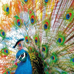 Proud Peacock Puzzle - 500 Piece Jigsaw PuzzleDisplaying a tail of many colors, this king peacock is a glorious show of color and layered detail. The colors are bright and the layers of detail will keep you happily engaged for hours at a time.