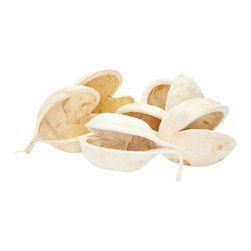 Lazy Susan - Bleached Buddha Nuts Shells - Set of 6 - We pride ourselves on designing beautiful products and collections which are a mix of modern and classic home accessories that are both innovative and inviting. The shells of this south Asian flowering plant have been gently treated and can be used as fillers in dishes and indoor displays.