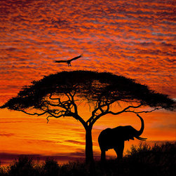 "Komar - African Sunset Wall Mural - A silhouette of an elephant, bird, and tree against a brilliant african sunset. This mural is 6'4"" x 8'10"" and comes as four easy to install panels. Made in Germany. Roll Coverage: 55.94 square feet. Paste Included."