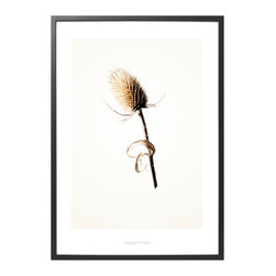 Hagedornhagen Copenhagen - Limited Edition Danish Art Poster  'Gold Series # 3' - This gorgeous poster from Danish photographer duo Hagedornhagen will add subtle, natural sophistication to any type of decor. Each poster looks wonderful on its own, or as a series grouped together on the wall. The posters depict ultra sharp photos that stand out beautifully on the paper. 'Gold' series is printed on 200gr. Galerie Art Silk paper in matte. Comes unframed and is delivered in a protective tube.