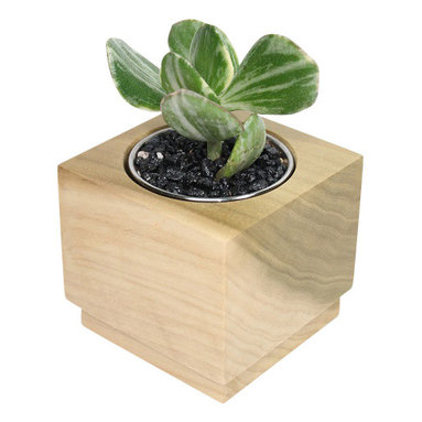 Crassula Domestic Hardwood Potted Plant - This hip & cool handmade cube is made from solid domestic Poplar hardwood which is native to the Eastern United States. We have chosen a  beautiful variegated crassula native to the Canary Islands  to give you an ideal option for your interior decoration. Place indoors under bright light. Water only twice a month and avoid spilling when watering. Tung oil or beeswax will help extend the lifespan of your planter and maintain a shiny look.