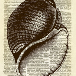 Altered Artichoke - Scotch Bonnet Seashell Dictionary Print, Sepia - This print features an amazingly detailed antique illustration of a scotch bonnet seashell. So pretty! A fabulous print for your beach-inspired decor.