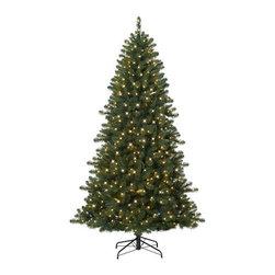 Wisconsin Fraser Fir Christmas Tree - GET NOSTALGIC WITH OUR WISCONSIN FRASER FIR CHRISTMAS TREE