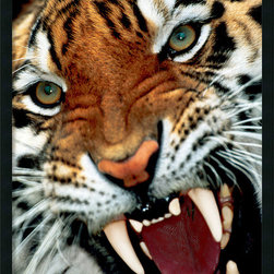 Amanti Art - Bengal Tiger Close-Up Framed with Gel Coated Finish - Get a little wild with your decor. The ultimate in equipoise, this tiger stares back into the photographer's lens with a look that says he knows who's boss.