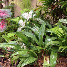 Great Groundcovers for the Tropics