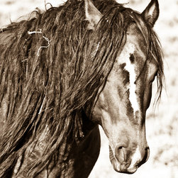 """Stallion, 48"""" X 72"""" - Limited Edition, Signed and Numbered. Editions of 25 Per Size. Metallic C-print on fine art quality archival photographic paper / C-Print Direct to Aluminum."""