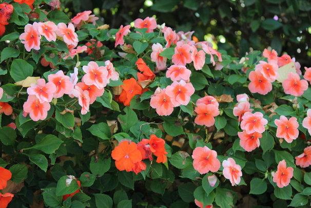 California Gardener's April Checklist