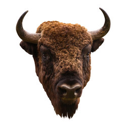 Walls Need Love - American Bison, Adhesive Wall Decal - This realistic image illustrates the warm textures on the American bison. You can't miss his doe-eyed expression, curly coat of brown shades and weathered horns.