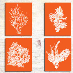 Orange Coral Artwork, Coral Prints - Four 8x10 renditions of antique sea coral, seaweed and sea kelp on a warm tangerine orange background.