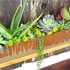 contemporary outdoor planters by DIG Gardens