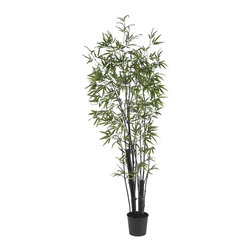 Nearly Natural - 6' Black Bamboo Silk Tree (2 Thick Trunks) - Not for outdoor use. Strong natural stalks and delicate leaves. Perfect recreation of a thriving bamboo tree. Featuring 1,132 leaves of fine materials. Included container size: 9 in. W X 8 in. H30 in. W X 30 in. D X 6 ft. H (11lbs). There is nothing quite like the gentle majesty of the Bamboo Tree. With its strong stalks and delicate leaves wistfully branching out in all directions, the Bamboo has captivated people the world over. And this perfect recreation of a thriving Bamboo Tree will add a touch of sophistication to any room (or yard.) Sporting 1,132 leaves and crafted from the finest materials, this amazing tree will bring you pleasure for years to come.