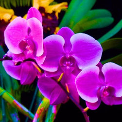 Orchid, 30 X 22 Canvas - Orchid: Print (30 X 22) Canvas