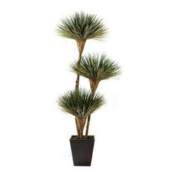 Dalmarko Designs - 3 Headed Variegated Dracena Tree - Our exclusive Dracena tree is locally grown in California and handcrafted by our artisans with over 30 years of experience.
