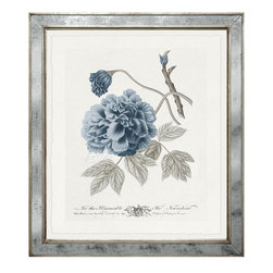 "Imperial Flowers Blue & Grey - Print 5 - This botanical series is inspired by the flowers found in The Imperial Gardens created by Francis 1st of Austria in 1791 and still one of Vienna's most beloved treasures. These fine art giclee reproductions are printed on aged paper with a deckle edge. They are individually numbered. Finish of the frame is silver leaf mirror. Measures 29""x33""."